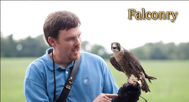 falconry north carolina, hunting north carolina, sporting clays nc, king fisher society nc